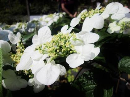 09_SpringPlantSale